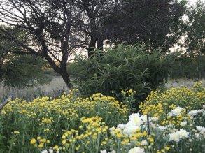acacia_gardens_1